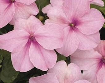 Impatiens- Pink -  50 seeds