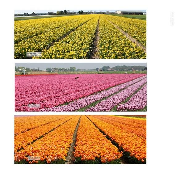 articles similaires facebook couverture photo du n erlandais fleurs champ paysage tulipes. Black Bedroom Furniture Sets. Home Design Ideas