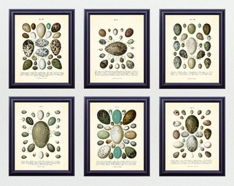 SET of 6 8x10 Art Prints Antique Bird EGGS Vintage Botanical Plates Natural History Illustration Home Room Wall Art Decor to Frame BN0407
