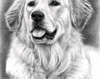 Golden Retriever - Fine Art Print