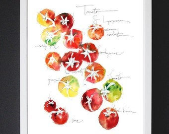 Tomato Study No.1 - Watercolor Art Print