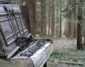 Piano in the woods photo print multiple sizes available