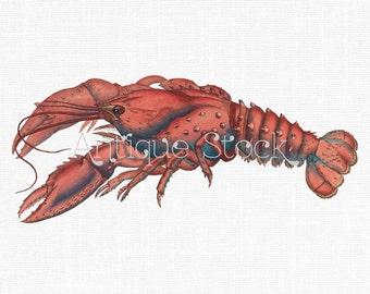 Vintage Clip Art 'Serrated Lobster' Printable Digital Download Image for Decoupage, Collages, Cards, Invitations, Crafts...