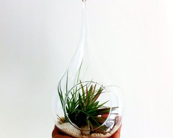 Hanging Air Plant Tear Drop Terrarium - Beachy themed