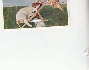 C1940s Postcards,Jack Russell Terrier Sleeping In Vintage Lawn Chair W Ummbrellla,Pull Out Views UK