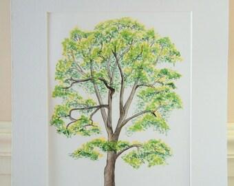 11X14 Oak Tree Watercolor painting art print Tree Painting Tree Art Tree Print Tree Watercolor botanical Oak Tree Painting Wall decor art