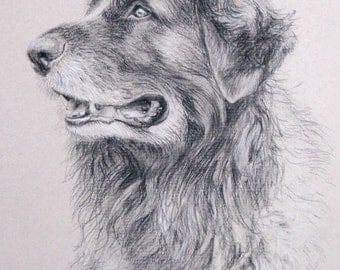 Custom Dog portrait, Pet portrait, Dog drawing, Dog Art - carbon pencil on Ingres paper, from your photographs.