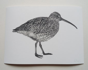 Curlew Illustration Giclee Print, A4