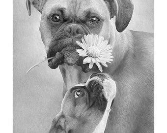 "Boxer dogs with flower in black and white. Custom print of a pencil drawing titled ""Flowery Expression"". 4 sizes available."