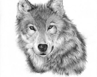Lone Wolf Pencil Drawing Print