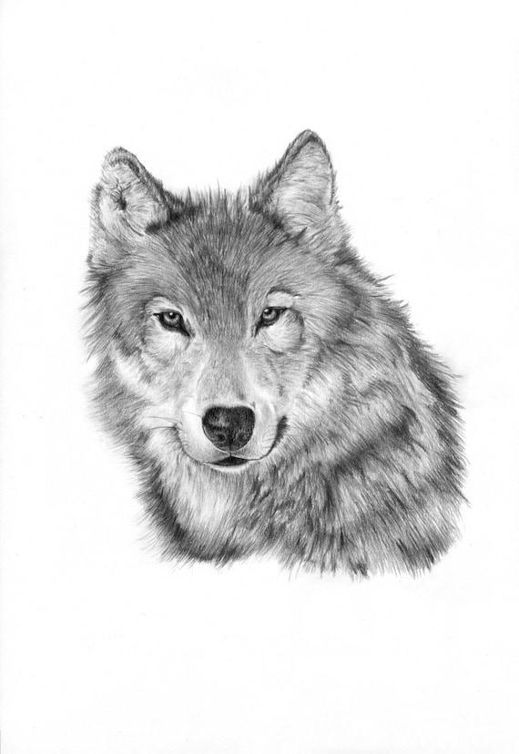 lupo solitario matita disegno stampa