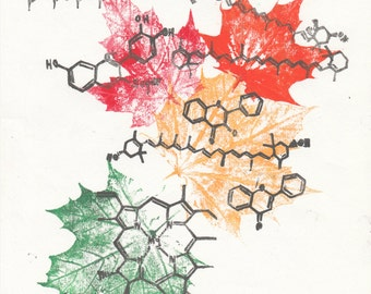 The Chemistry of Leaf Colour Linocut and Leaf Prints, Lino Block Print Organic Molecules and Multicoloured Leaf Prints, Maple Leaves