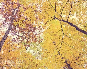 Nature Photography, Forrest Print, Autumn Trees Print, Autumn Home Decor, Look Up