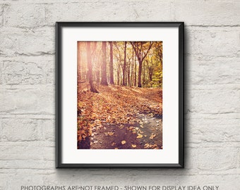 Nature Photography, Woodland Woods Rustic, Walden Pond, Trees Autumn Fall Foliage, Leaves and Trees, Orange, Landscape Photograph, Hike
