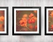 Orange Botanical Photograph Set - 3 square flower floral photo home decor prints