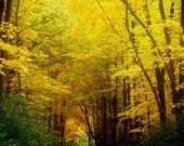 Autumn golden yellow leaves, fine art nature photograph, green, sunny, color photography, modern home decor, fall woodland print