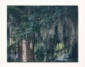 "New Orleans City Park Oak Tree Print. Louisiana Photograph ""Spanish Moss"". Louisiana Home Decor, Wall Art"