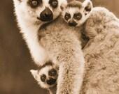 Jungle Nursery Decor, Baby RING-TAILED LEMUR and Mom Photo, Sepia Print, Mom and Baby Animal Photography, Safari Nursery Art, Animal Twins