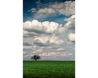 Lone Tree in a Field of Green Grass in South East Texas No.0618 - A Fine Art Tree Landscape Photograph