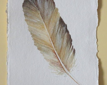 Original watercolour feather painting illustration part of a series set