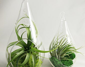 Droplet Air Plant Terrariums Set of Two (Small + Medium) // Choose your Own Moss Colors
