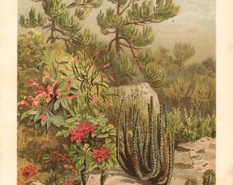 1894 Euphorbias, Poinsettia, Broom Spurge, Malayan Spurge, Official Spurge, Melon Spurge, Globose Spurge, Crown of Thorns Antique Lithograph