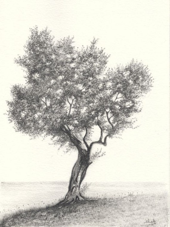 how to draw an olive tree