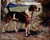 Foxhound Antique Dog Print Vernon Stokes 1906 Book Plate Gorgeous