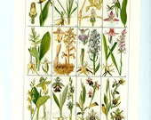 FLOWER CHART Orchids Vintage Botanical Print Antique, plant botanical print, bookplate art print, herb herbs plants plant wall print