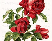 RED ROSES Dell and Bower Vintage Flower Printable Digital Image for Cardmaking Mixed Media Scrapbooking