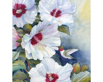 Hummingbird Art Watercolor Print White Hibiscus Flower Wall Decor by Janet Zeh Original Art