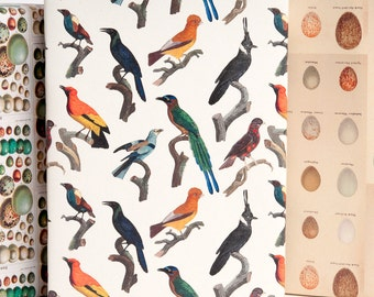 Bird & Egg Gift Wrap
