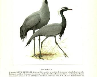 1960 Vintage crane poster print VIntage bird illustration Antique bird picture of cranes Vintage bird decor Bird art Bird gift Hunter gift
