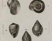 1816 Antique print of SEASHELLS. Seashell. Molluscs. Mollusks. Sea Snails. Shells. Conchs. SEA LIFE. 200 years old engraving.
