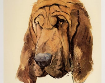 Vintage BLOODHOUND Print  Bloodhound Illustration Art Cottage Home Decor Dog Gallery Wall Art Dog Lover Gift 2657