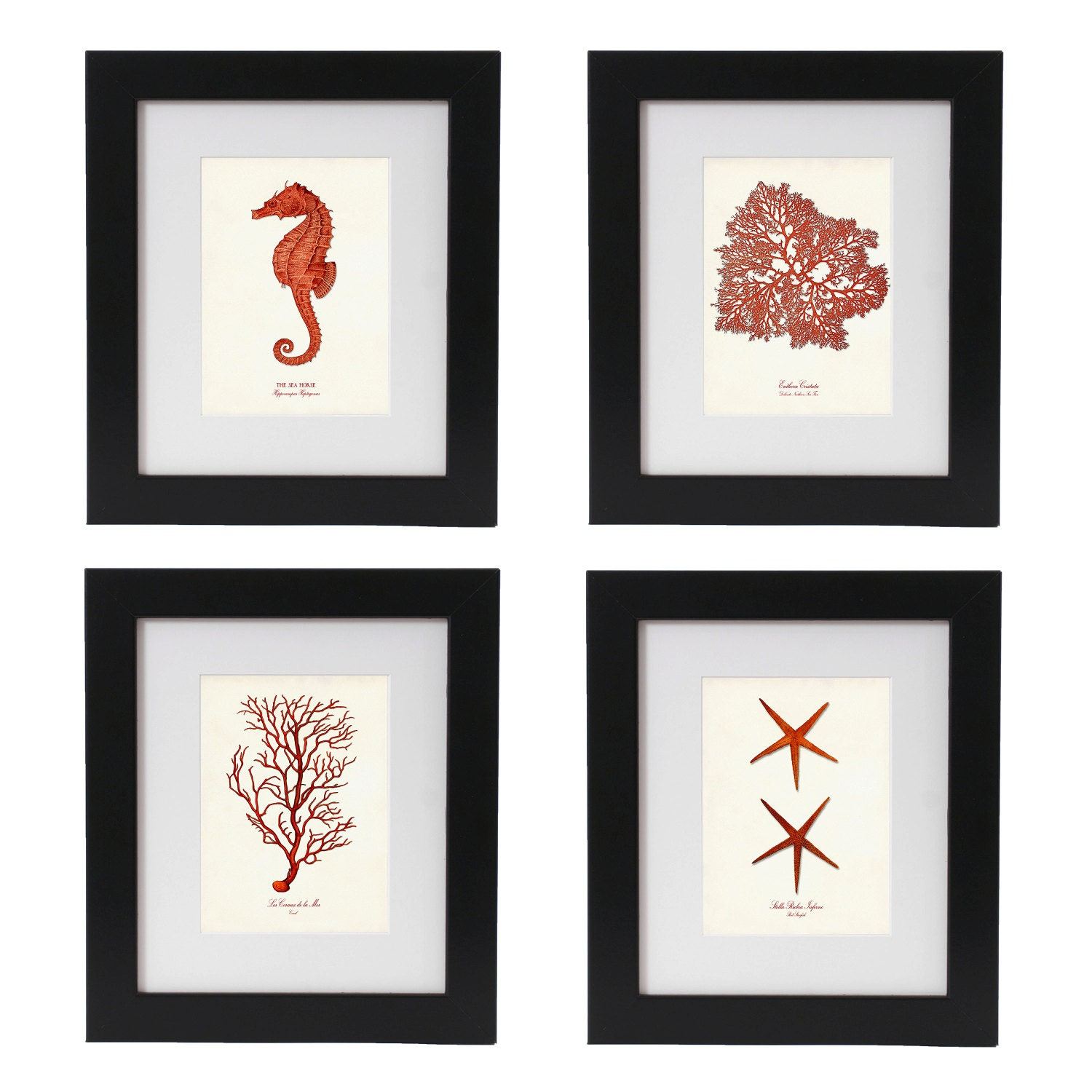 Coral Red Nautical Art Print Set of 4 Nautical Posters Set
