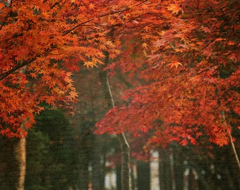 Love letters to Autumn - Photographic Print - fall, Art, Wall, Hanging, Decor, Photography, asia, leaves, seoul, asian, orange, autumn