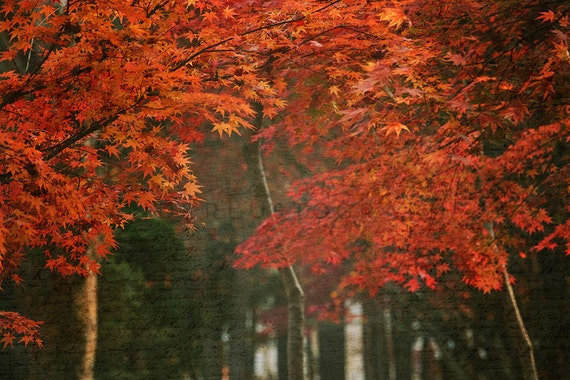 Love Letters To Autumn Photographic Print Fall Art Wall