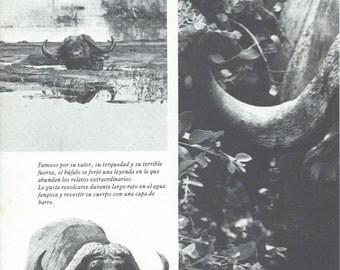 Vintage buffalo poster