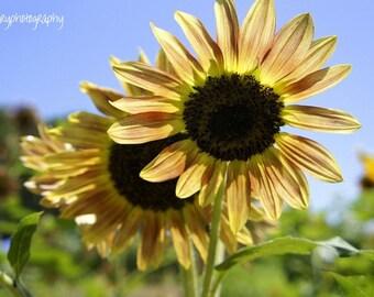 Sunny Day Photographic Print
