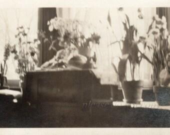 Vintage Photograph ~ still life photo ~ flowers  ~ snapshot photo