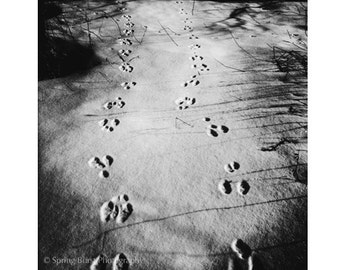 Rabbit Art, Animal Art, Woodland Photography, Black And White Photography, Rabbit Tracks, Animal Tracks, Whimsical Art, Rabbit Photography