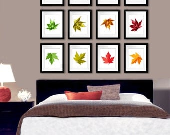 Fall Decor Set of 12 Maple leaf  Botanical art prints Fall foliage colors, Fall Decoration. Gnosis Picture Archive