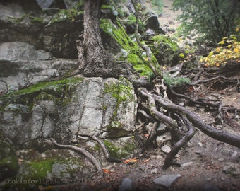 Tree Roots Photo | Surreal Tree Roots | Vernal Falls Trail | Woodland Print | Forest Tree Roots | Yosemite National Park | California Nature