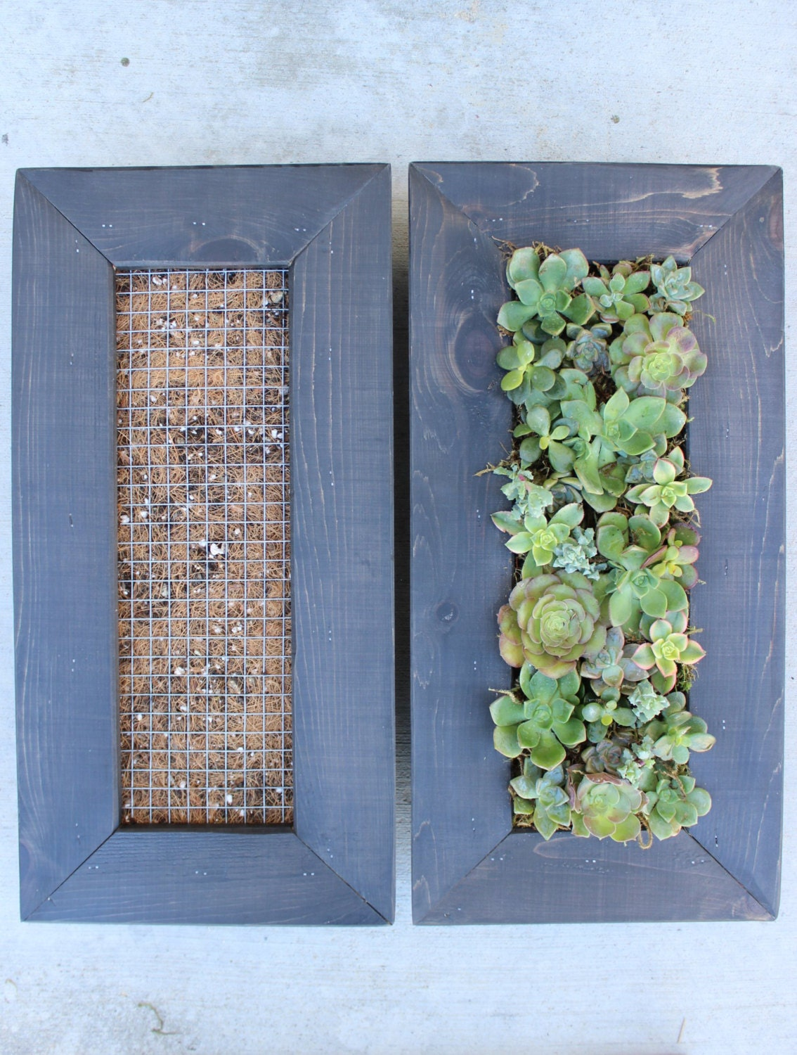 Diy vertical hanging succulent living wall great by for Living walls vertical gardens