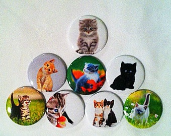 MAGNET GIFT SET: Set of 8, 1.5 inch magnets Kitten magnets, Refrigerator magnets, Whiteboard magnets.