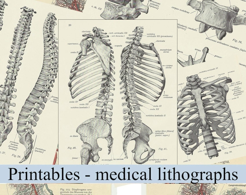 Medical Anatomy Posters