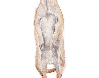 Meerkat Watercolor Painting 5 x 7 Giclee Fine Art Print - Animal Painting