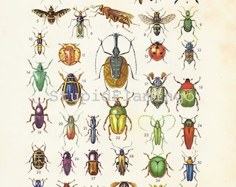 INSECTS Retro Poster from Spain, 1960's