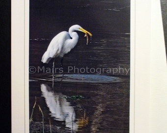 Great Egret, Bird Pond Fish, Nature Photography, Birthday Card, Get Well Card, All Occasion, Blank Greeting Card, Photo Card, Eco-Friendly